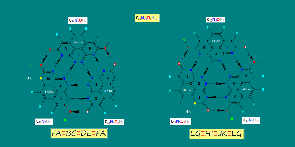 Triple Helix DNA Bases_CH3.PNG