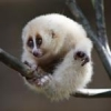 I need a spreadsheet of the ENTIRE TABLE OF ELEMENTS - last post by slow loris