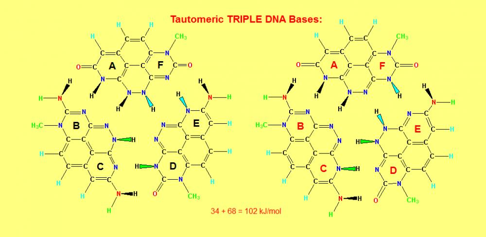 5b78b5217adfc_TripleHelixDNABases_7.thumb.PNG.287273fc6e401bd7e735b8c72f8b223e.PNG