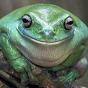Bufofrog
