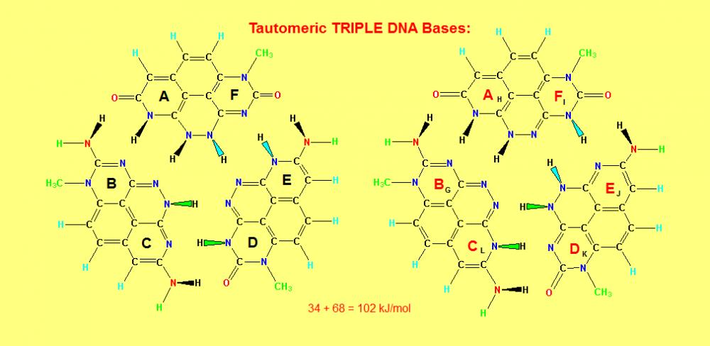 575999390_TripleHelixDNABases_2.thumb.PNG.05f8731c8dd488e118330bda4af92c22.PNG