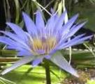 lotus1.jpg.db6191e846bf84923bf4da228462a86a.jpg